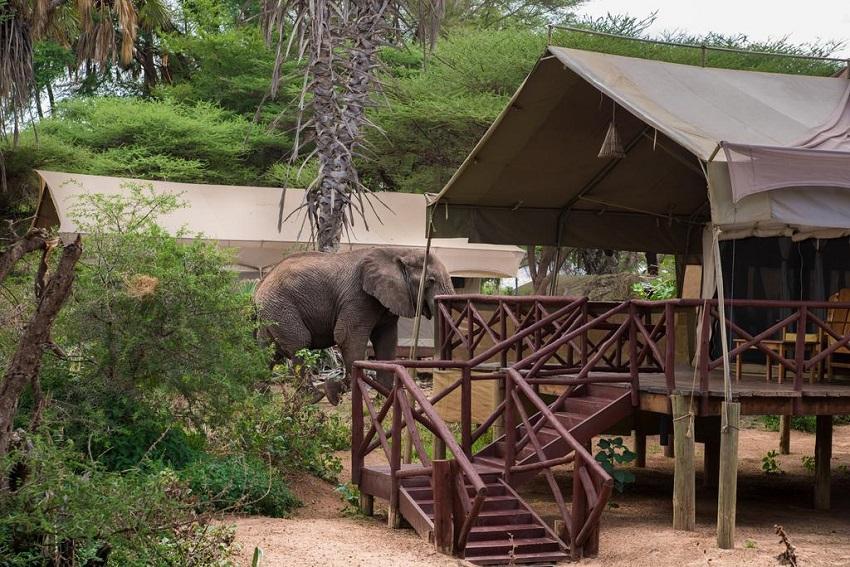 Elephant Beedrom Camp