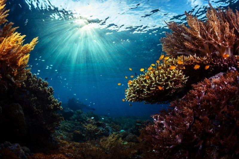 Arrecife indonesio