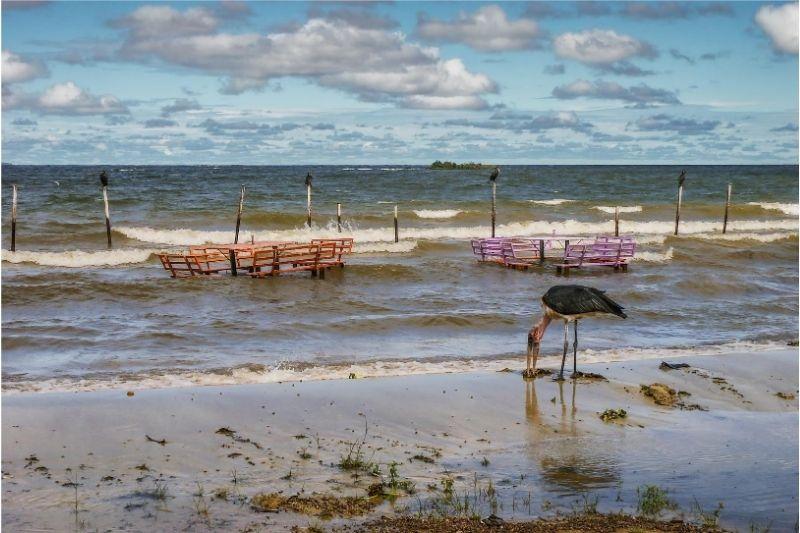 Garza en la orilla del Lago Victoria