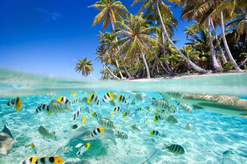 Peces de colores en Polinesia