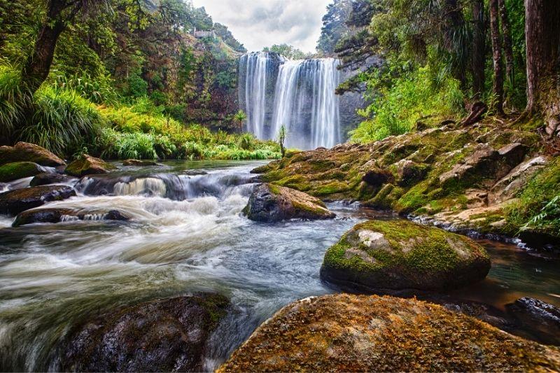 Cascada y bosque de Nueva Zelanda