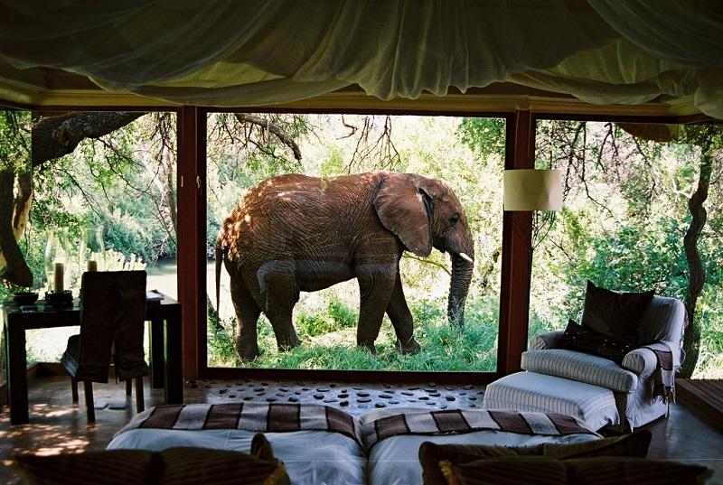 Elefante en habitación del Makanyane Safari Lodge