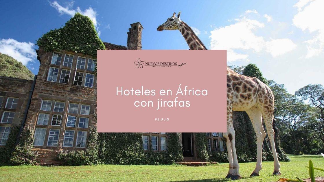 8 hoteles en África con jirafas para tu próximo viaje
