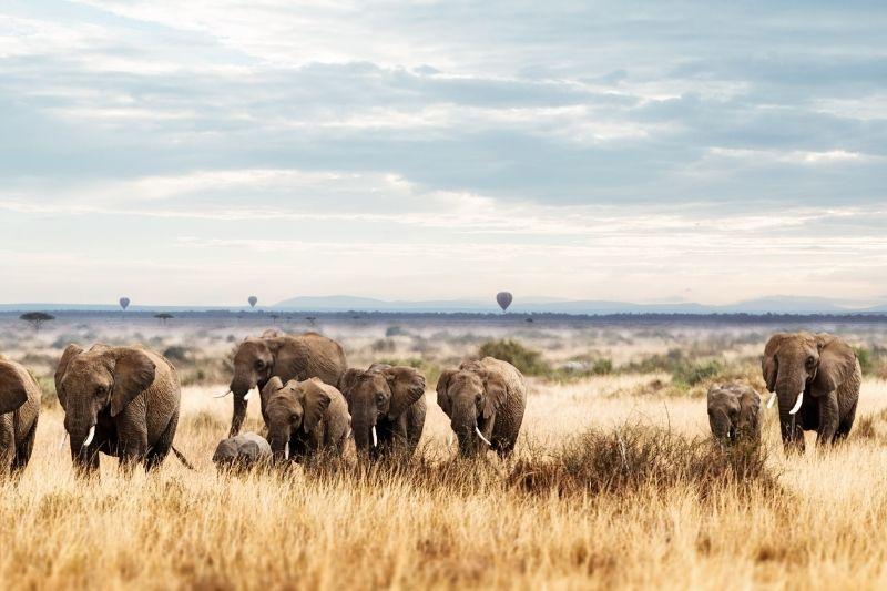 Elefantes y globos aerostáticos