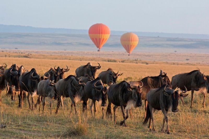 Gran Migración desde un safari en globo