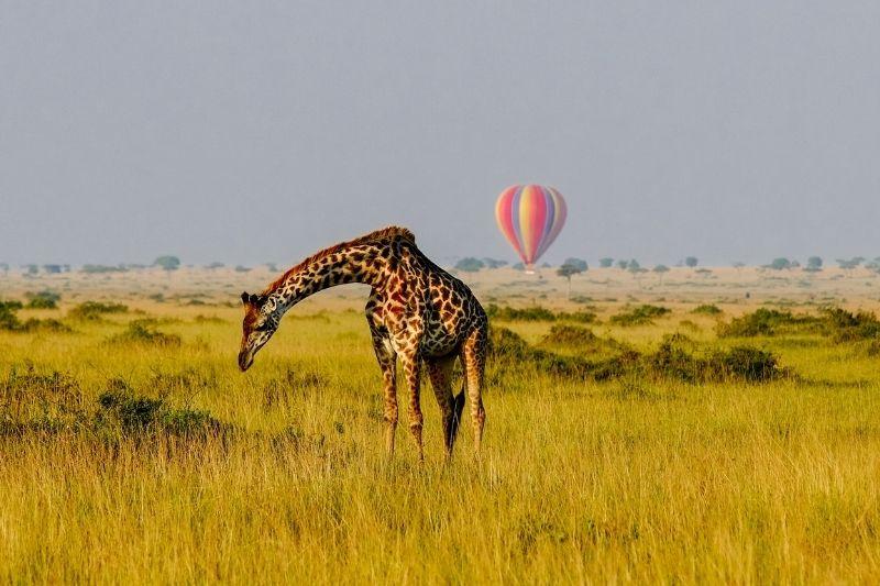 Jirafa y globo aerostático