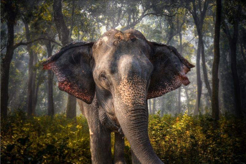 Elefante de Chitwan