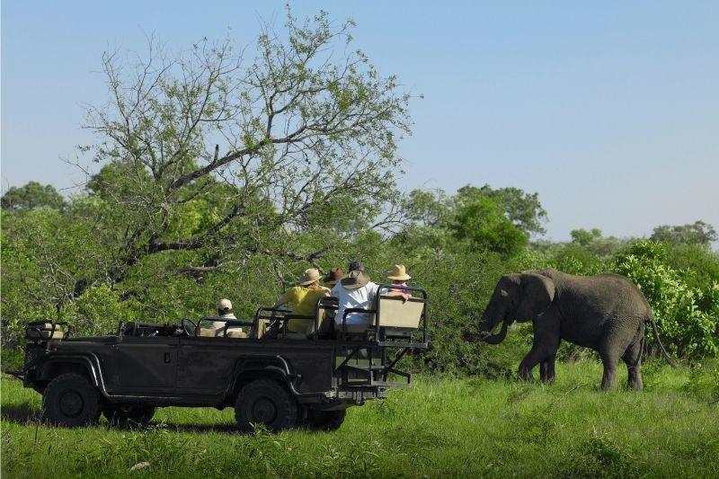 Safari 4x4 elefante